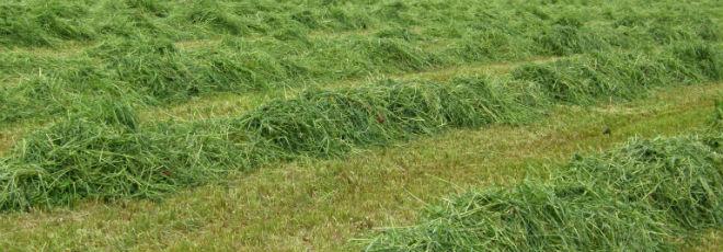 fauche d'herbe